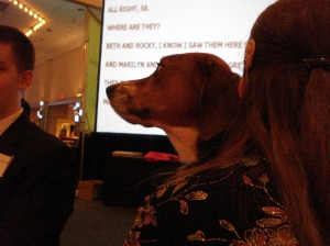 """Listening to the therapy dogs being """"caped"""""""