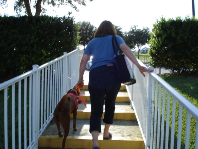 Chloe on stairs in Leesburg, Florida