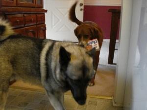Chloe retrieves the Little Debbies