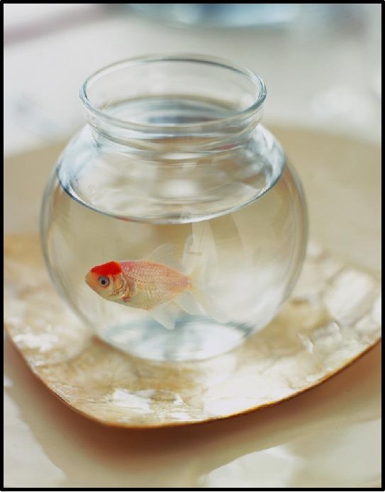 Half empty, or half full? Well MINE has a goldfish in it.