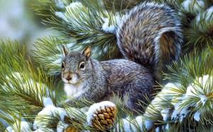 squirrel-pin-tree-winter-snow-nature-hd-wallpaper-desktop-free-animals-picture-squirrel-hd-wallpaper