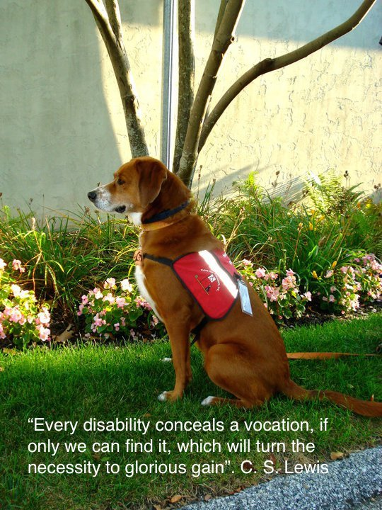 Service Dog For Meniere S Disease