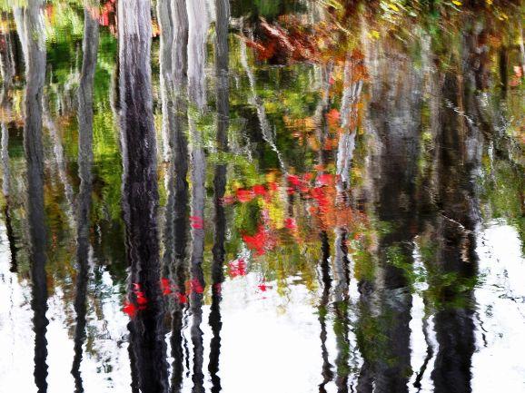 Autumn... reflections
